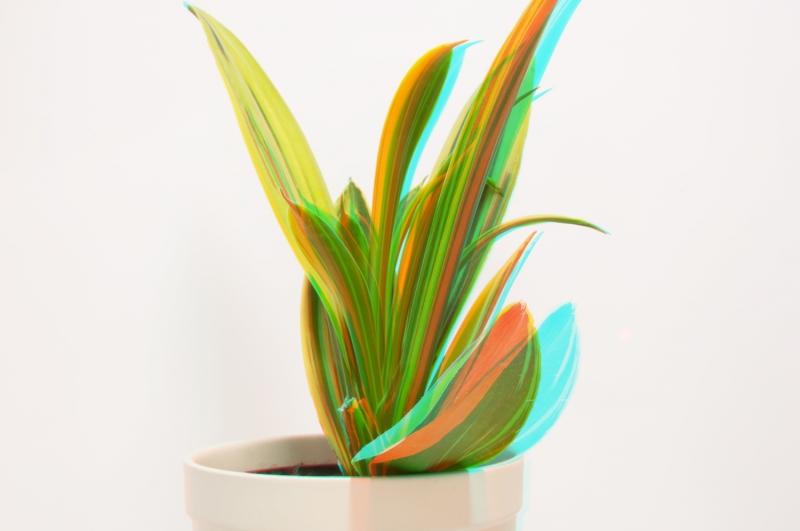 Растение в 3D