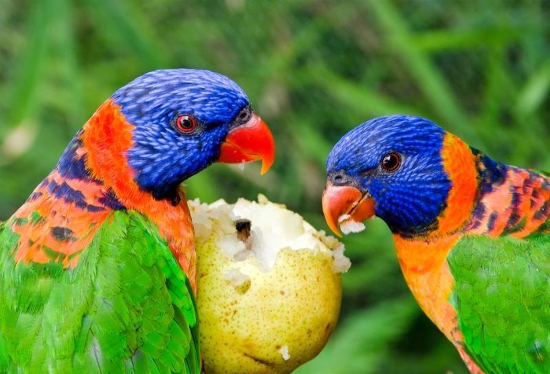 птицы трапезничают