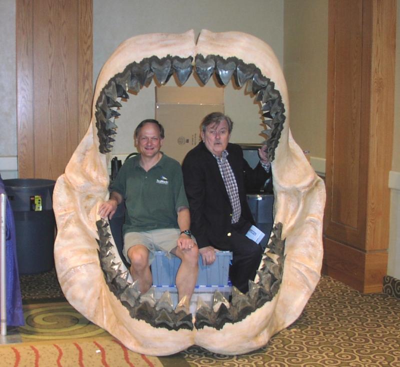 челюсти мегалодона.