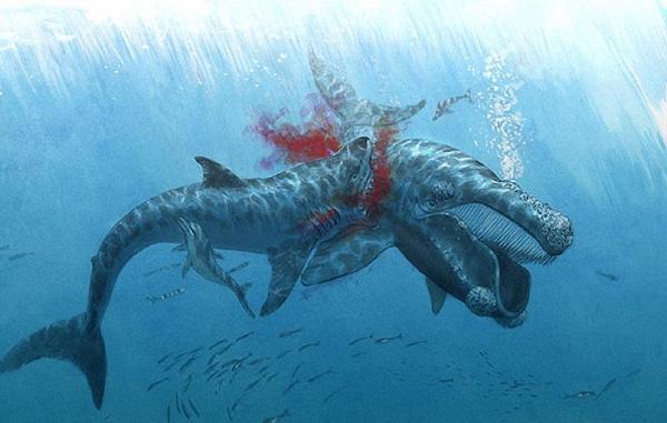 мегалодон охотится на кита