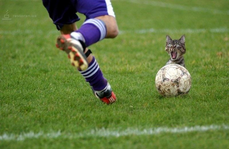 Скачать в футбол игра