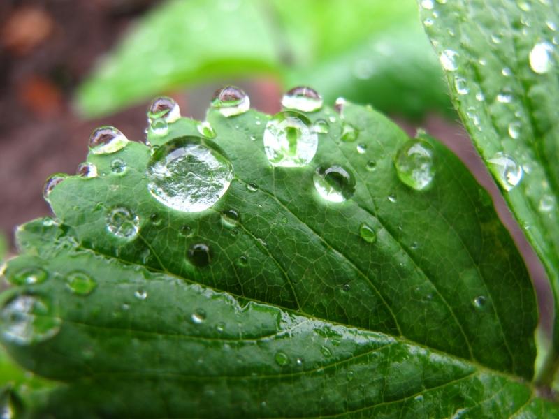 капли дождя на листе