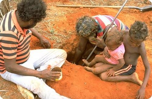 аборигены ловят медовых муравьев