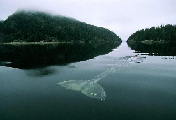 52х герцовый кит