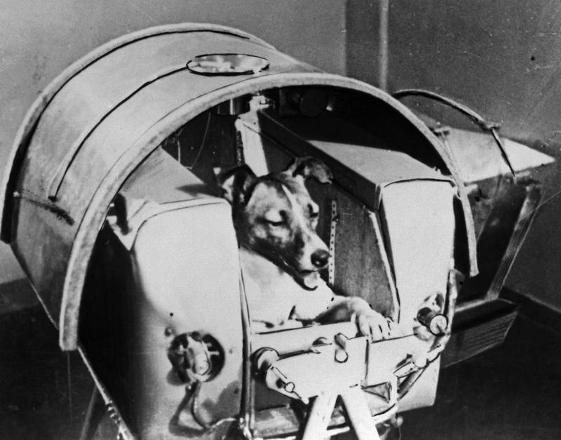 Лайка первый космонавт Сатурн-2