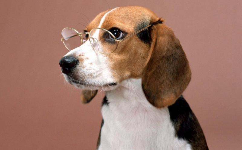 Насколько хорошо видят собаки ?